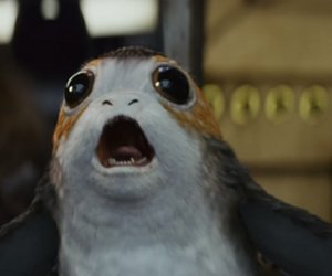 """Was sind Porgs? Alle Infos zu den """"Star Wars""""-Tierchen"""