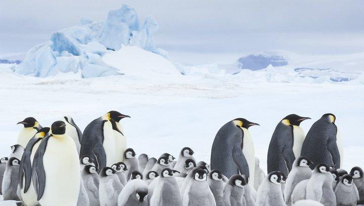 Die Reise der Pinguine 2 - Trailer Poster