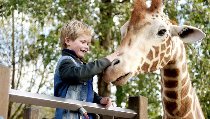 Mein Freund, die Giraffe - Trailer Deutsch Poster
