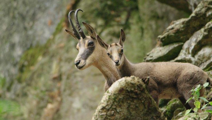 Auf der Jagd - Wem gehört die Natur? - Trailer Deutsch Poster