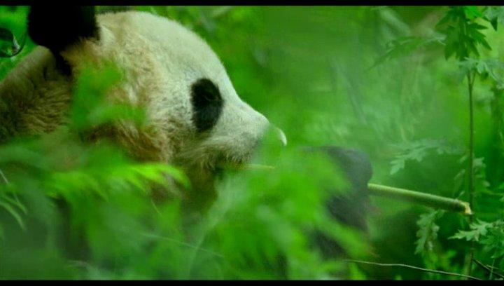 Pandamutter mit ihrem Jungen - Szene Poster