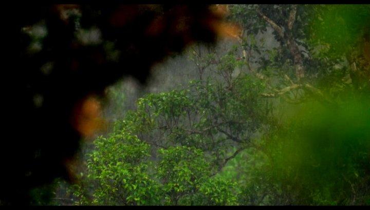 Kolibri und Bienen kämpfen um Nektar - Szene Poster