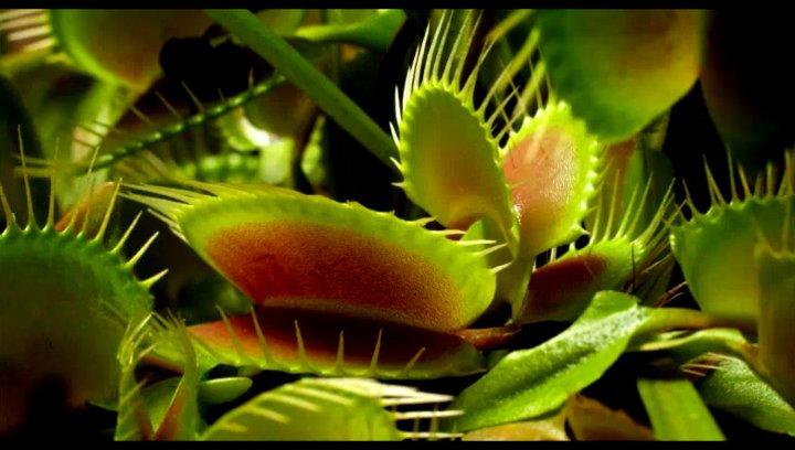 Fotosynthese - Szene Poster