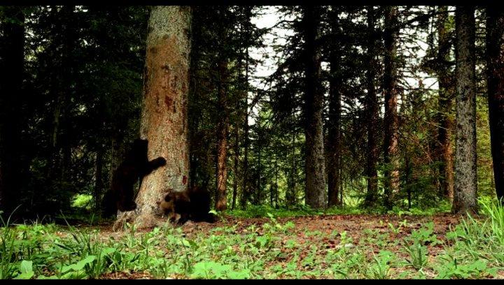 Braunbären entledigen sich ihres Winterfells - Szene Poster