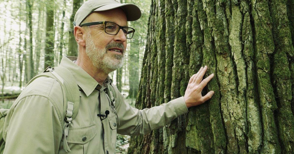 Film Das Geheime Leben Der Bäume